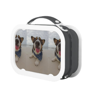 Cute Corgi with Tongue Out Lunchboxes