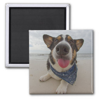 Cute Corgi with Tongue Out Square Magnet