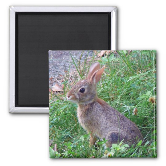 Cute Cottontail Bunny Rabbit Magnet
