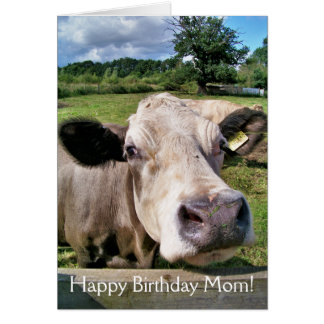 CUTE COW GREETING CARDS