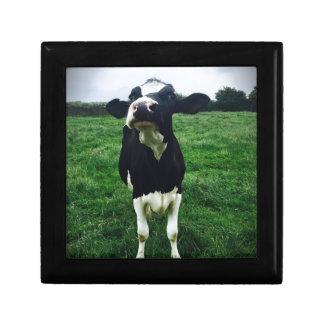 Cute cow farm animal calf gift box