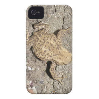 Cute Crawling Toad Blackberry Bold Case