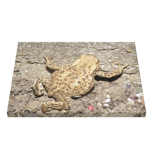 Cute Crawling Toad Canvas Print