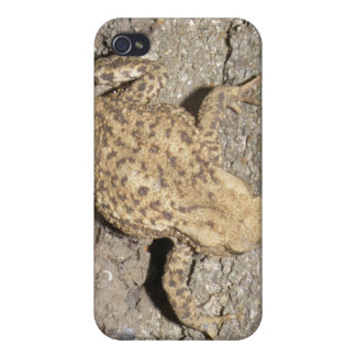 Cute Crawling Toad  iPhone 4/4S Cover