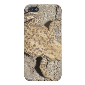 Cute Crawling Toad  iPhone 5/5S Cover