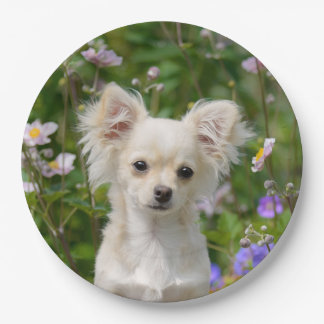 Cute cream Chihuahua Dog Puppy Photo - Happy Party Paper Plate