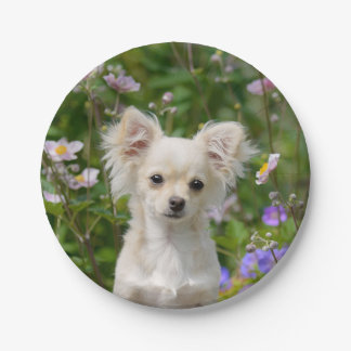 Cute cream Chihuahua Dog Puppy Photo - party Paper Plate