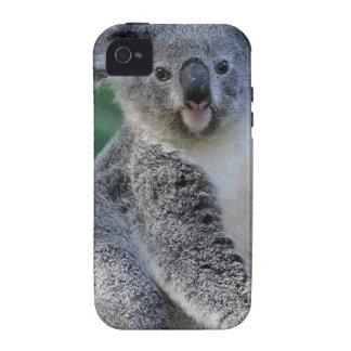 Cute cuddly Australian koala Vibe iPhone 4 Cases