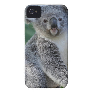Cute cuddly Australian koala Case-Mate iPhone 4 Cases