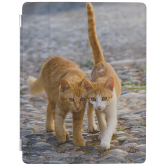 Cute Cuddly Cats Kittens Friends Walk a Stony Path iPad Cover