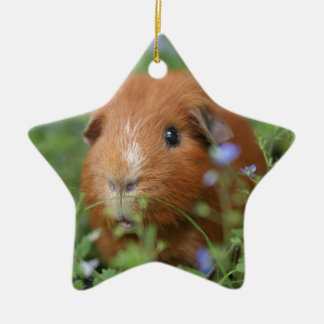 Cute cuddly ginger guinea pig outside on grass christmas ornament