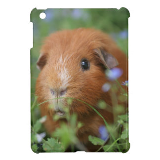 Cute cuddly ginger guinea pig outside on grass iPad mini cover