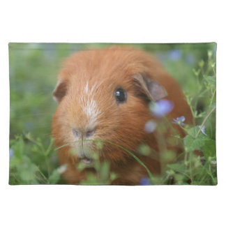 Cute cuddly ginger guinea pig outside on grass placemat