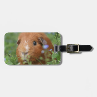 Cute cuddly ginger guinea pig outside on grass tag for luggage