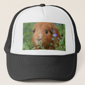 Cute cuddly ginger guinea pig outside on grass trucker hat