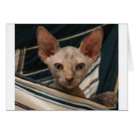 Cute curios sphynx kitten greeting card
