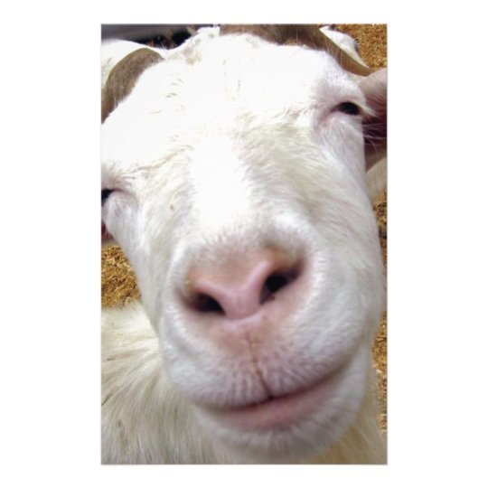 cute curious baby goat stationery