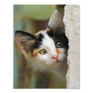 Cute Curious Cat Kitten Prying Eyes - Paperprint Photo