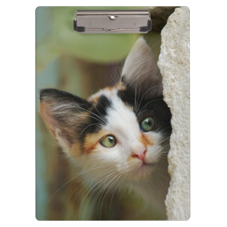 Cute Curious Cat Kitten Prying Eyes Portrait Photo Clipboard