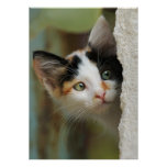 Cute curious kitten with prying eyes poster