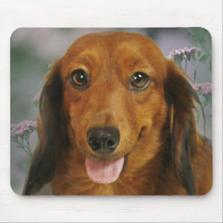 Cute Dachshund (Brown Long Haired) Wild Flowers Mouse Mat