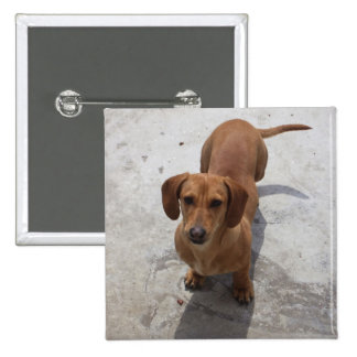 Cute Dachshund Collection 15 Cm Square Badge