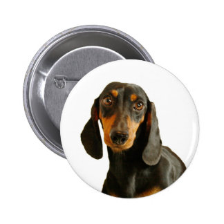 Cute Dachshund ( Miniature Brown Short Haired ) 6 Cm Round Badge