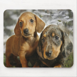 Cute Dachshund Puppies (Brown/Black) Mouse Pad
