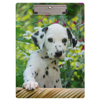 Cute Dalmatian Dog Puppy Portrait Pet Photo - on Clipboard