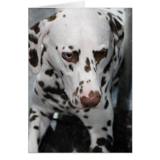 Cute Dalmatian  Greeting Cards