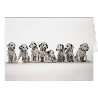 cute dalmation puppies pupy pup pups dog dogs card