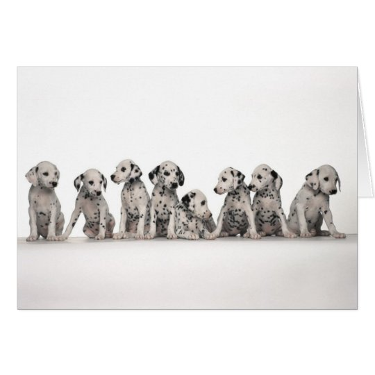 cute dalmation puppies pupy pup pups dog dogs