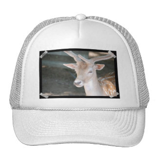 Cute Deer Baseball Hat