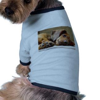 Cute dog pet shirt