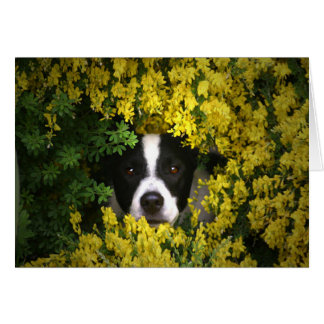 Cute Dog in Flowers Saying Hello Card