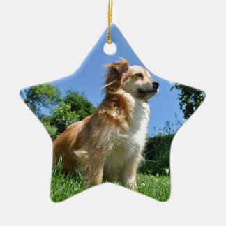 Cute dog in grass ceramic star decoration