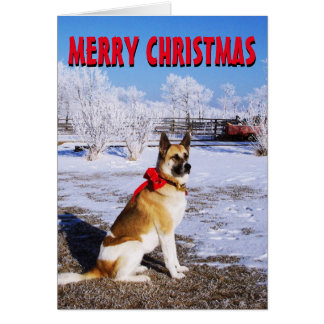 Cute dog in the snow Christmas Card