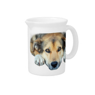 Cute dog on any color background pitcher