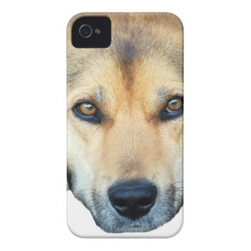 Cute dog on any colour background iPhone 4 covers