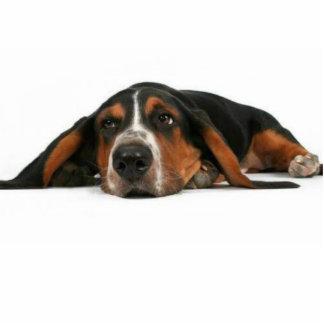 cute dog photo cutout