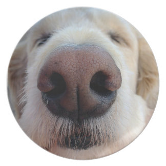 Cute Dog Plate