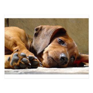 Cute dog postcard