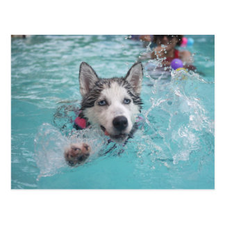 Cute dog swimming in pool postcard