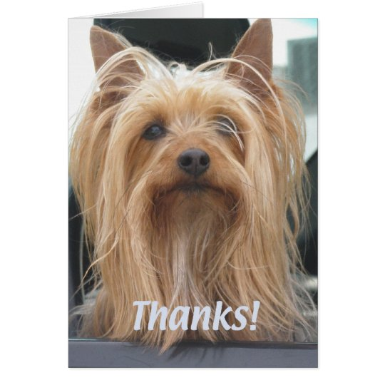 Cute Doggie Thank You Card