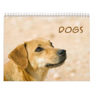 Cute Dogs 2013 Wall Calendar