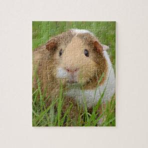 Cute Domestic Guinea Pig Jigsaw Puzzle