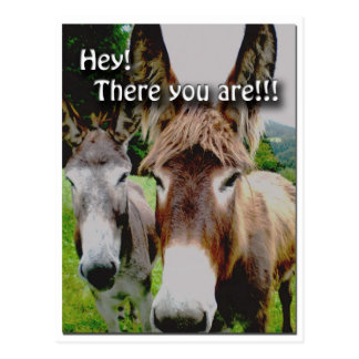 "Cute Donkey ""There you are!!!"" Postcard"