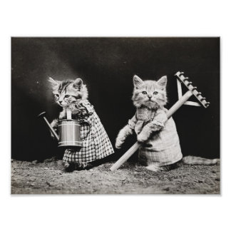 Cute dressed cats vintage poster