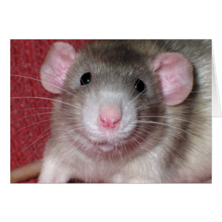 Cute Dumbo Rat Card