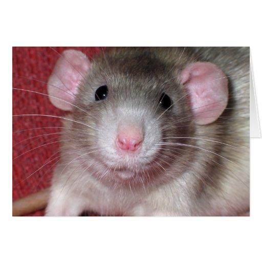 Cute Dumbo Rat Greeting Cards